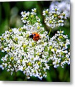 Pretty Little Ladybug Metal Print by Mariola Bitner