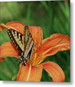 Pretty Orange Lily With A Butterfly On It's Petals Metal Print