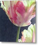 Pretty Parrot Tulip 2 Metal Print