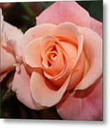 Pretty Peach Metal Print