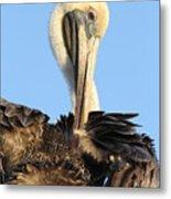 Pretty Pelican Metal Print