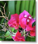 Pretty Pink Flowers 2 Metal Print