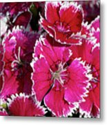 Pretty Pinks Metal Print