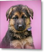 Pretty Puppy In Pink Metal Print