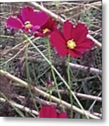 Pretty Red And Yellow Flowers In The Twigs Metal Print