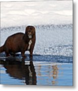 Pretty Reflecting Mink Metal Print