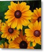 Pretty Rudbeckia Flowers In Bloom Metal Print