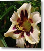 Pretty Single Blooming Daylily In A Garden Metal Print