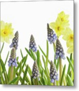 Pretty Spring Flowers All In A Row Metal Print