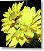 Pretty Yellow Flowers Metal Print