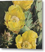 Prickle Pear Cactus Flower Trio Metal Print
