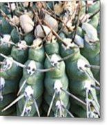 Prickly Cactus Metal Print