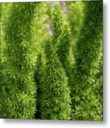 Prickly Green Shrub Metal Print