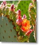 Prickly Pear Blooms Metal Print