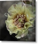 Prickly Pear Blossom 3 Metal Print by Roger Snyder