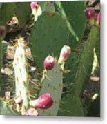 Prickly Pear Buds Metal Print