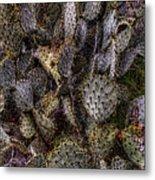 Prickly Pear Cactus At Tonto National Monument Metal Print