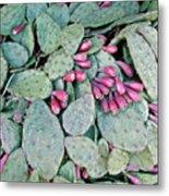 Prickly Pear Cactus Fruits Metal Print