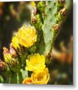 Prickly Pear Cactus In Bloom Metal Print