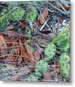 Prickly Pear Cactus Metal Print