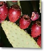 Prickly Pear-jerome Arizona Metal Print