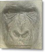 Primate Metal Print