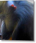 Primate1 Metal Print