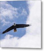 Prince Rupert Eagle Flight Metal Print