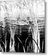 Private Duck Swimming Hole 1 In Black And White Metal Print