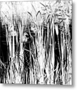 Private Duck Swimming Hole 2 In Black And White Metal Print