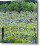 Private Property -wildflowers Of Texas. Metal Print