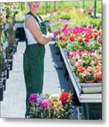 Professional Gardener At Work In A Nursery. Metal Print