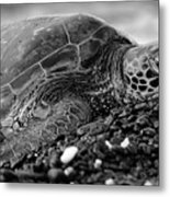 Profile Hawaiian Sea Turtle Bw Metal Print