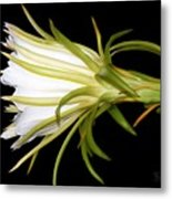 Profile Night Blooming Cereus Metal Print