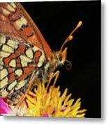 Profile Of A Butterfly Metal Print