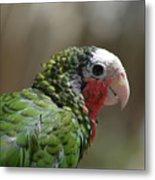 Profile Of A Conure Parrot Up Close Metal Print