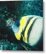 Profile Of A Cortez Angelfish Metal Print by James Forte