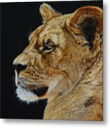 Profile Of A Lioness Metal Print