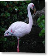 Profile Of A Pink Lesser Flamingo Metal Print