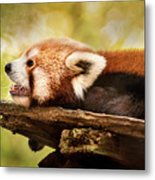 Profile Of A Red Panda Metal Print