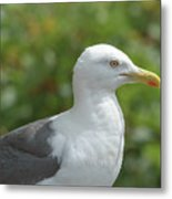 Profile Of Adult Seagull Metal Print