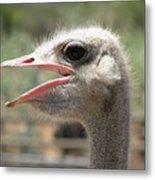 Profile Of An Ostrich Metal Print