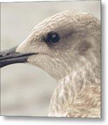 Profile Of Juvenile Seagull Metal Print