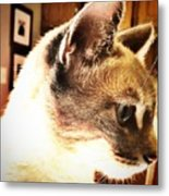 Profile Of The Cat Metal Print