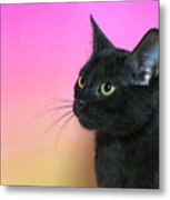 Profile Portrait Of A Black Kitten Metal Print