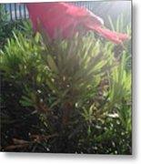 Prop Cardinal #2 Metal Print