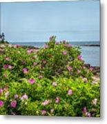 Prospect Harboa Roses Metal Print