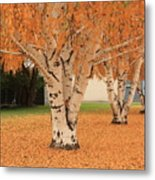 Prosser - Autumn Birch Trees Metal Print