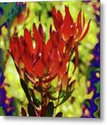Protea Flower 4 Metal Print