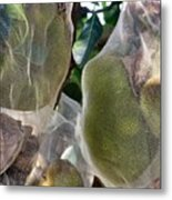 Protect Your Durian Metal Print